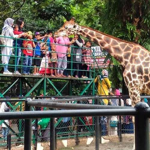 5 Interesting Facts About Surabaya Zoo